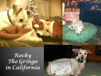 Rocky the Gringo / Rocky el Gringo