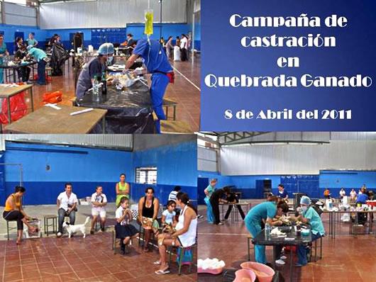 Quebrada Ganado spay clinic