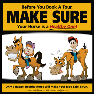 Ethical Horse Tours
