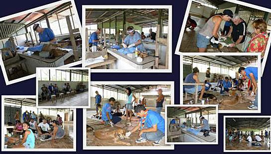 February 2012 Clinic / Clinica Febrero 2012
