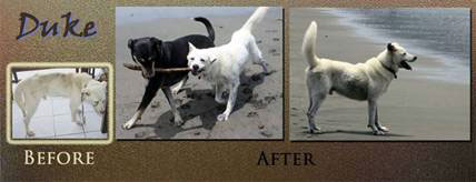 Duke before and after