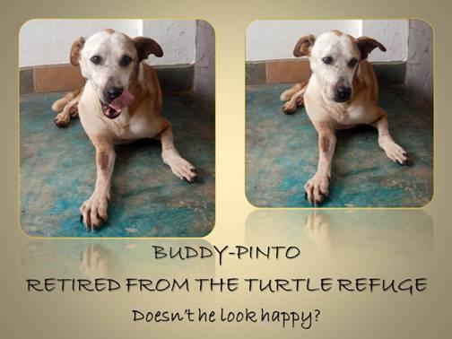 Buddy / Pinto retires