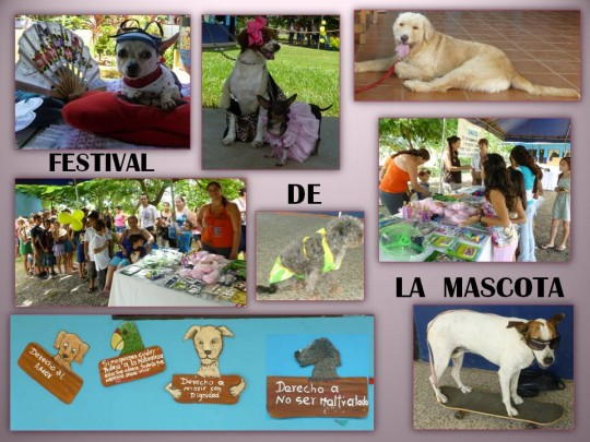 Pet Festival in Jacó