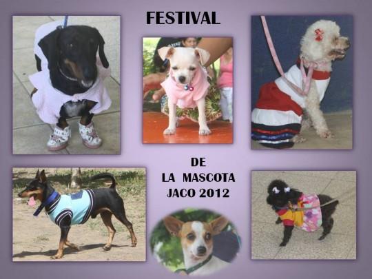 Pet Festival 2012