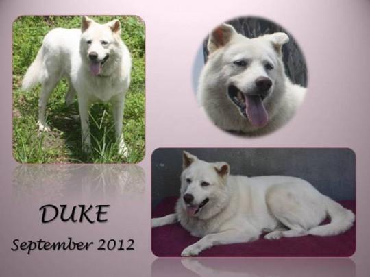 Duke 2012