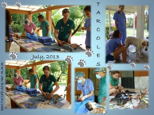 Spay Clinic / Clinica de Castracion