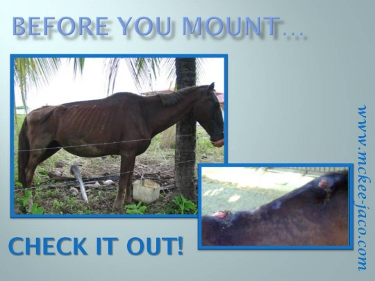Check the horse - revise el caballo
