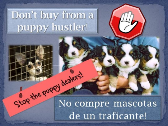 No puppy hustling!